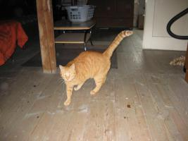 Foto 3 Roter Kater sucht neues Zuhause