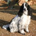 Rund um den Hund - Hundeschule - Betreuung - Pflege