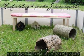 SCHWEINCHENSCHUTZ - Aufnahme und Vermittlung von Meerschweinchen