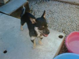 Foto 2 SERGIO – es fehlt ihm noch das Allerwichtigste.... (Tierschutzhund)