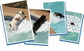 Foto 3 SUPER Skamper-Ramp SK3. Schützt Haustiere von Ertrinken.