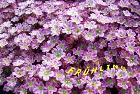 Saatgut, Pflanzen, Gartenzubehör - 5 Euro Rabatt - www.gutscheinmarkt.de.to