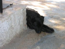 Foto 3 Sachspenden für Italiens Strassenhunde