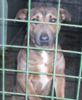 Foto 2 Sammy braucht endlich sein Zuhause