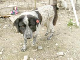 Foto 2 Sammy (geb. 2005)