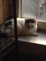 Sanny, Katze, 3 Jahre, eine sehr traurige Dame