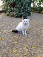 Foto 2 Sanny, Katze, 3 Jahre, eine sehr traurige Dame
