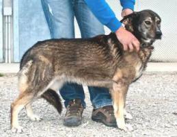 Foto 4 Schäferhund Mix MARTINA sucht ein Zuhause oder PS