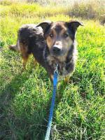 Foto 8 Schäferhund Mix MISTYC sucht ein Zuhause oder PS