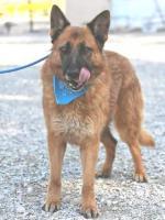 Foto 5 Schäferhund Mix OTTIN sucht ein Zuhause oder PS
