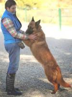 Foto 6 Schäferhund Mix OTTIN sucht ein Zuhause oder PS