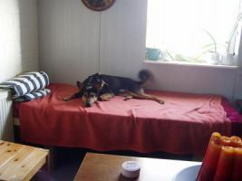 Foto 5 Schäferhund Mix aus dem Tierschutz!