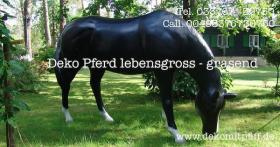 Foto 5 Schenken sie doch mal ein Deko Pferd Ihren gatten … www.dekomitpfiff.de