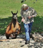 Schicken Sie ihr Lama / Alpaka in die Schule der Vogelsberglamas