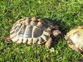 Foto 2 Schildkröten