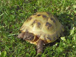 Foto 3 Schildkröten