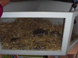 Foto 4 Schildkröten