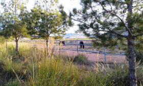 Foto 2 *Schnäppchen* 2 Häuser und Pferderanch auf 138000 qm Grundstück günstig zu verkaufen!