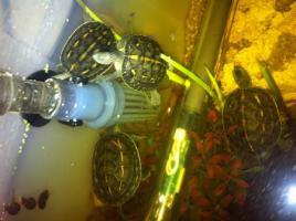 Schöne Schildkröten