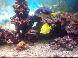 Seewasseraquarium