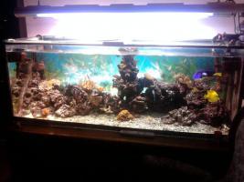 Foto 2 Seewasseraquarium