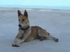 Foto 2 Sehr lieber Hund sucht Plätzchen