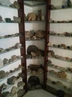 Seltene Fossilien und Mineralien