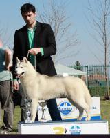 Foto 3 Siberian Husky Welpen mit FCI Papieren