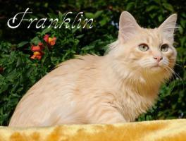 Foto 4 Sibirische Katzenkinder suchen liebevolles Zuhause