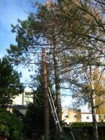Foto 2 Sie brauchen jemanden der Ihre Bäume fällt - dann rufen Sie an