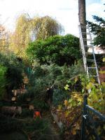 Foto 4 Sie brauchen jemanden der Ihre Bäume fällt - dann rufen Sie an