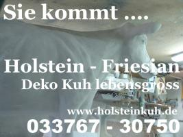 Sie kommt .... Holstein Deko Kuh lebensgross  ... Tel. 0049 (0) 33767 - 30750  - www.holsteinkuh.de anklicken