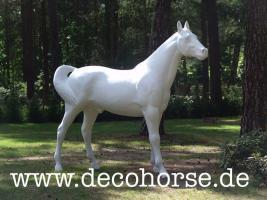 Foto 8 Sie möchten eine Deko Kuh oder doch ein Deko Pferd oder vielicht eine ganz unverbindliche Beratung vor dem Kauf ?