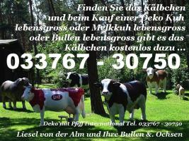 Sie möchten eine Deko Kuh lebensgross für Ihren Garten erwerben ... ja dann einfach mal anrufen Tel. 033767 - 30750