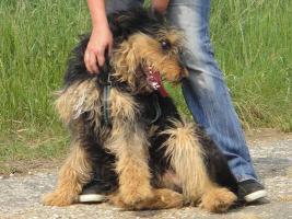Silvester - ein Traumhund sucht