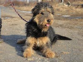 Foto 2 Silvester - ein Traumhund sucht