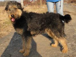 Foto 4 Silvester - ein Traumhund sucht
