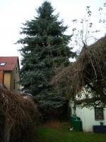 Sind die Bäume Ihnen übers Dach gewachsen? Fällungs-Bedarf?
