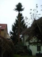 Foto 2 Sind die Bäume Ihnen übers Dach gewachsen? Fällungs-Bedarf?