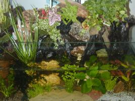 Sonderangebot Aquarium 200 x 50 x 50 cm um nur 222,00€