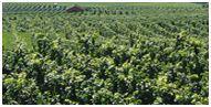 Spitzenweine Portugal Region Tejo Direktverkauf