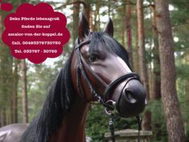 Stell Dir vor so ein Deko Pferd steht in Deinen Schaufenster was glaubst Du bleiben die Kunden stehn oder nicht ?