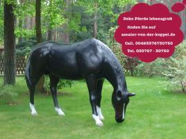 Foto 3 Stell Dir vor so ein Deko Pferd steht in Deinen Schaufenster was glaubst Du bleiben die Kunden stehn oder nicht ?