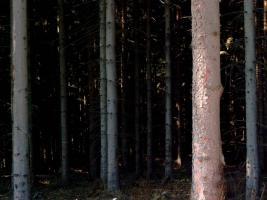 Suche Brennholz aller Art