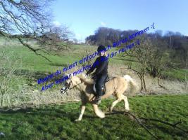 Suche eine Reitschülerin die 1-2mal pro woche zum reiten auf einem welsh a pony.
