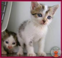 Süße Katzenbabys suchen ein liebevolles Zuhause