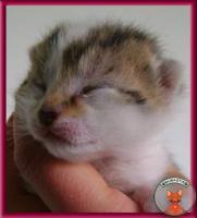Foto 2 Süße Katzenbabys suchen ein liebevolles Zuhause
