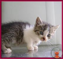 Foto 5 Süße Katzenbabys suchen ein liebevolles Zuhause