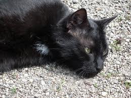Foto 4 Süße, schwarze Katzendame