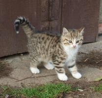 Süßes Kätzchen zu verschencken